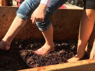 Mosto a Casa un evento virtuale dedicato alla degustazione di vini umbri