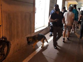 Movida ternana al setaccio, sequestrata droga fiutata dal cane Faye
