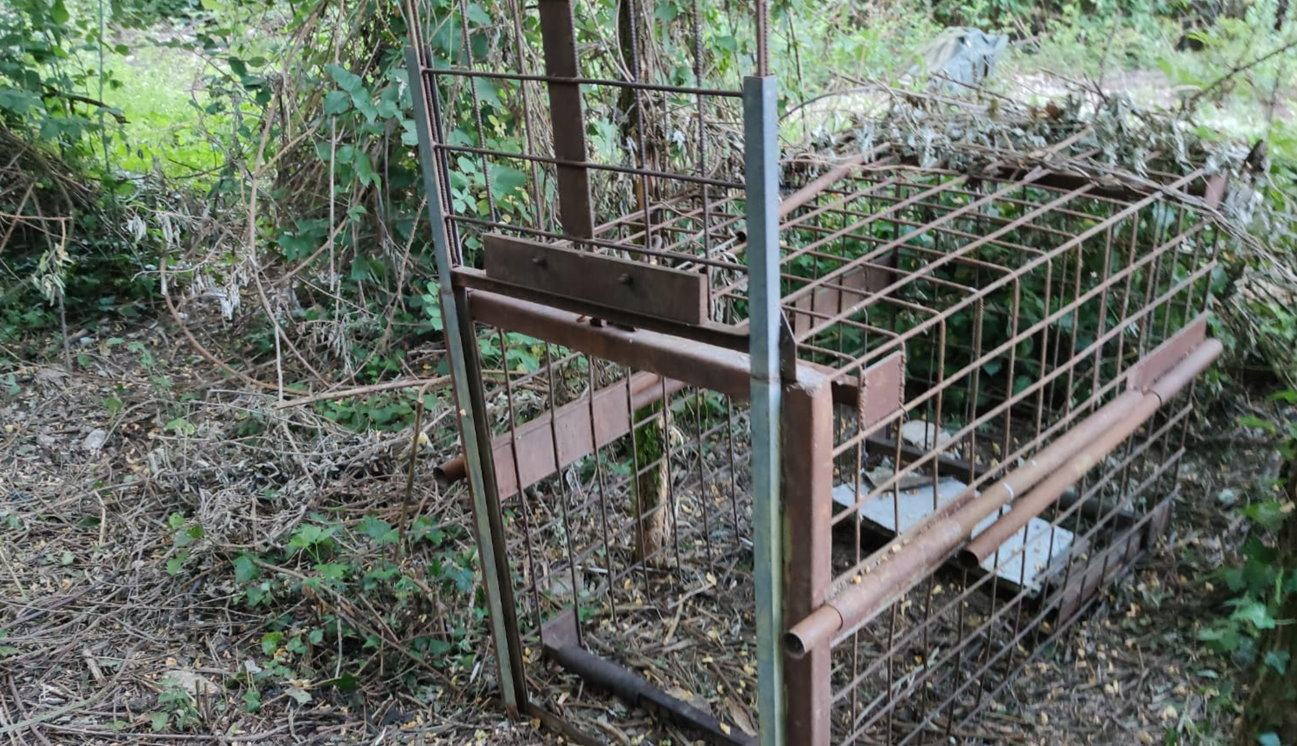 Sequestrate trappole illegali per cattura di animali scoperte dai Forestali