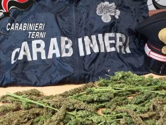 Coppia di conviventi spacciavano marijuana, è per noi, ma i Carabinieri....