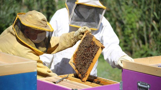 Le api crescono in acciaieria: la colonia di AST si moltiplica