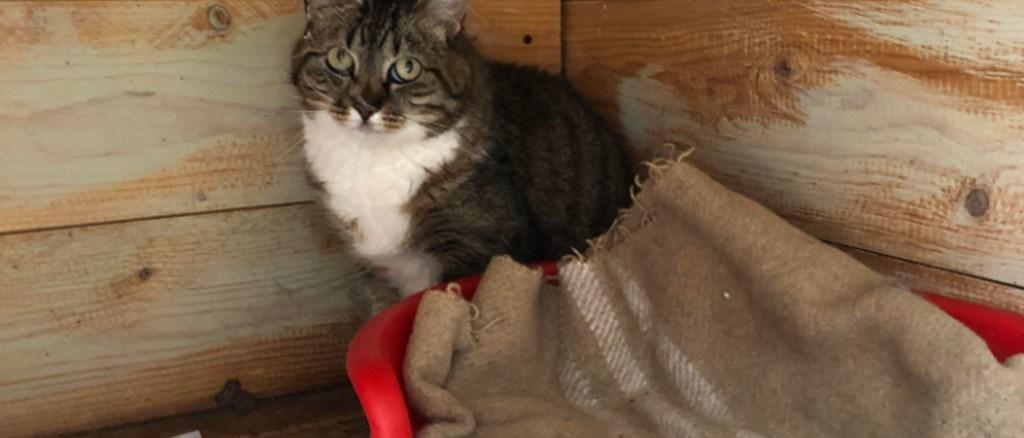 Gattina spaesata e spaventata cerca vecchi o nuovi proprietari