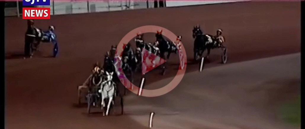 Via Lattea, la cavallina bianca di Assisi vince in Usa