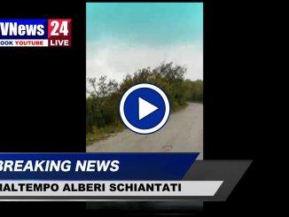 Alberi e rami schiantati in Umbria, video del maltempo, decine di interventi