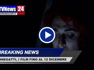 Cinegatti, programmazione a Perugia dal 6 al 12 dicembre 2018
