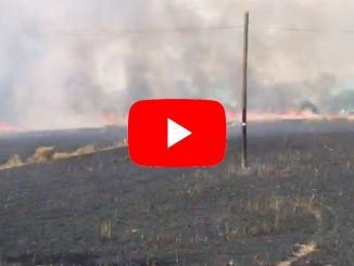 Incendio devasta campo di grano guarda il video della devastazione