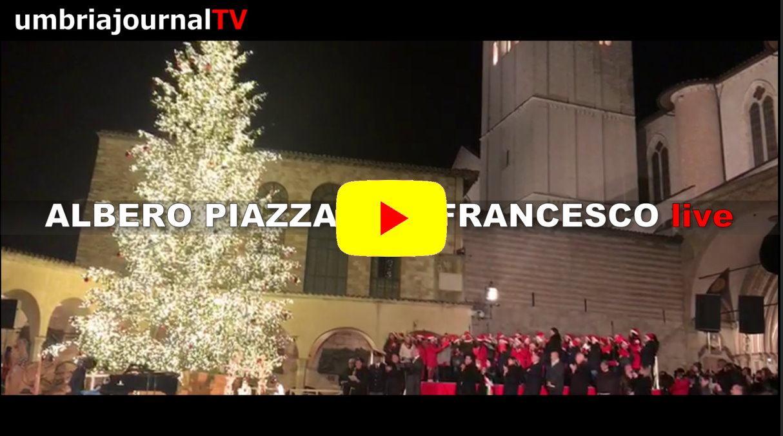 L'Albero di Natale di San Francesco dal Cadore, guarda 45 mila luci che si accendono