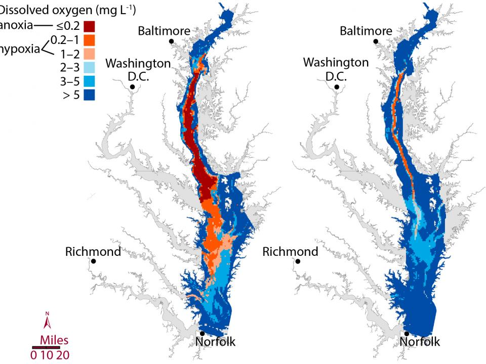 Larger summer dead zone predicted for Chesapeake Bay  University of Maryland Center for