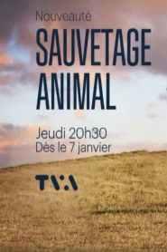 Sauvetage animal