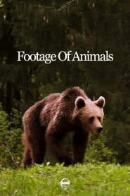 Footage Of Animals