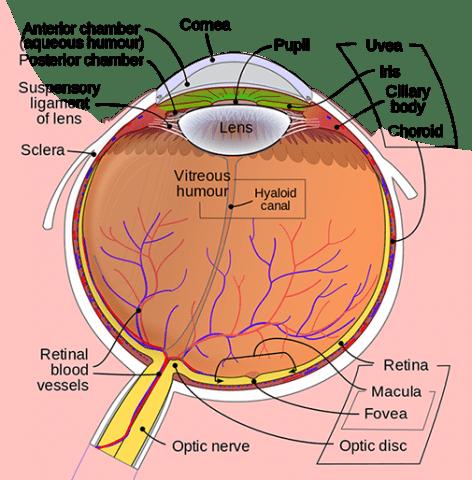 Anatomy of the Eye | Kellogg Eye Center | Michigan Medicine