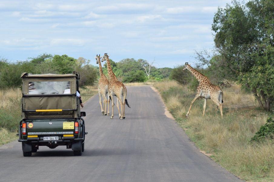 ingi giraffe