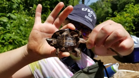 Senior Abigail Conklin conducted field work with Assistant Professor of Biology Brad Lamphere on how temperatures and urbanization impact the sex of turtles.