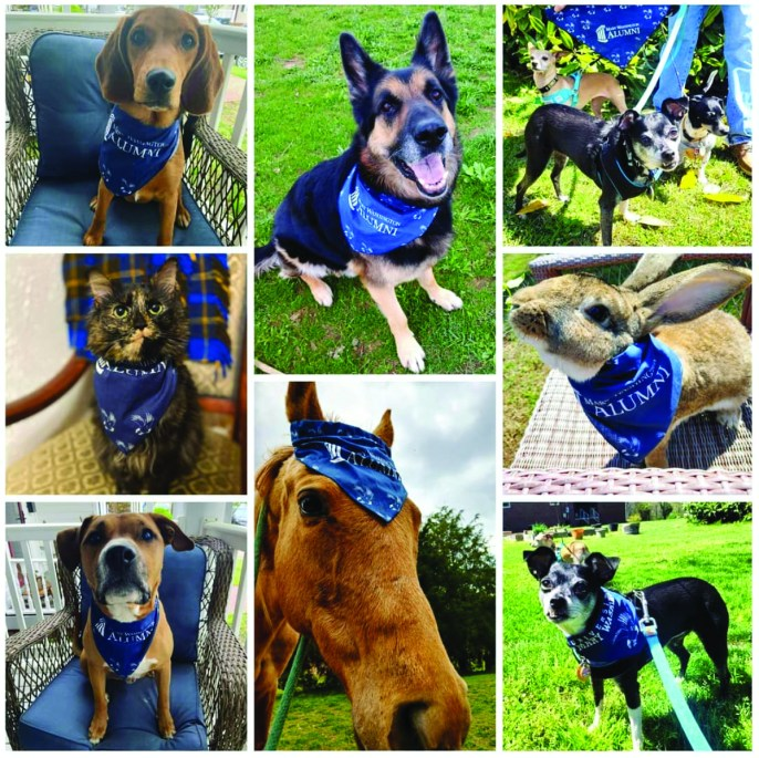 The UMW Alumni Association provided pet bandannas and asked alumni to share photos of their furry friends wearing them on Giving Day. Hundreds of alumni joined the fun by posting photos of their decked-out dogs, cats, horses, rabbits and even a turtle.