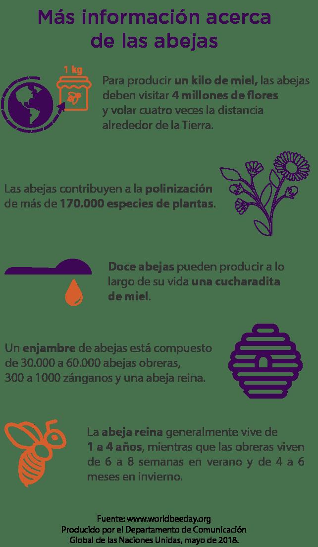 Infografía sobre las abejas