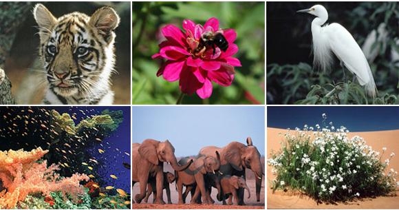 Fotografías de Flora y Fauna.