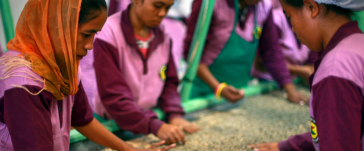 Los manipuladores de café de la Cooperativa de Café Timor tamizando granos de café. Foto ONU/Martine Perret.