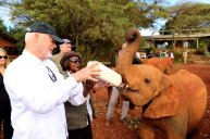 Visiting elephants orphanage in Kenya