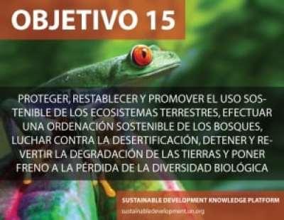 Objetivo 15