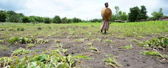Las inundaciones de principios de 2015 en Malawi causaron daños graves a la agricultura y arruinaron gran parte de las tierras fértiles del país. Foto: PNUD/Arjan van de Merwe