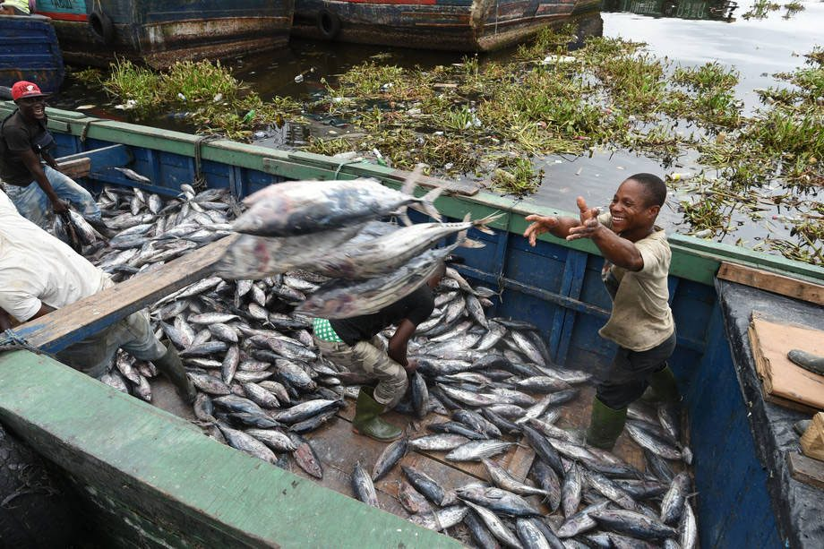 Pesca de atún en el puerto industrial de Abidjan, en Côte d´Ivoire. Foto: FAO/Sia Kambou