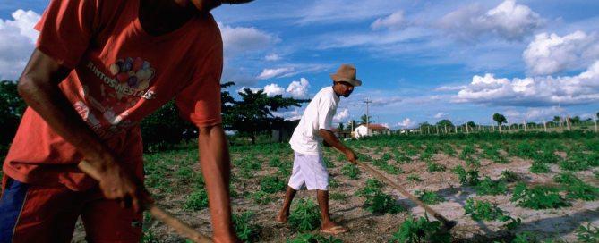 Trabajadores agrícolas en el noreste de Brasil. Foto de archivo: Banco Mundial/Scott Wallace