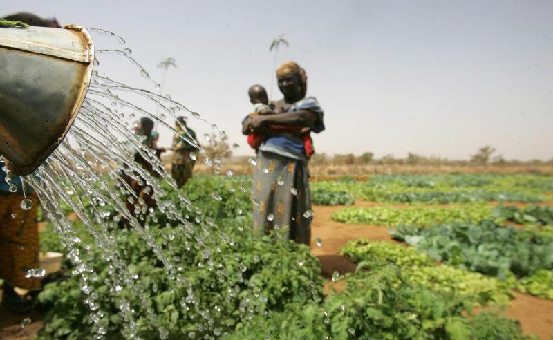 Des fermiers en train d'irriguer dans le cadre d'un projet au Niger soutenu par la FAO. Photo: FAO/Giulio Napolitano