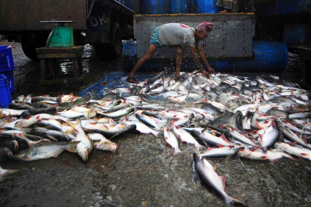 Un travailleur décharge la pêche du matin. Photo : FAO