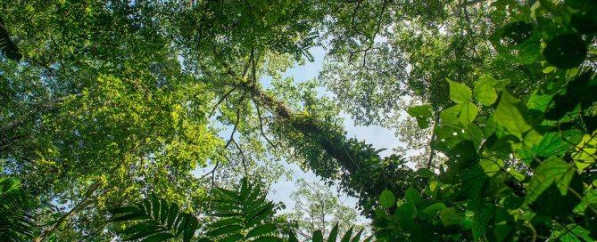Леса - источник дохода для множества людей Фото программы ООН-СВОД