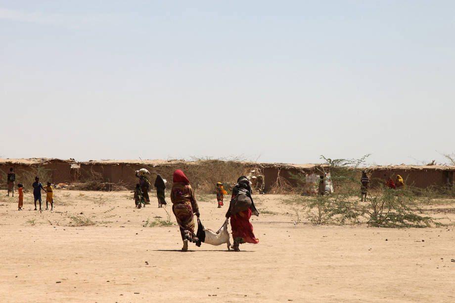 Засуха в результате Эль-Нинью Фото ФАО/Тамиру Легессе