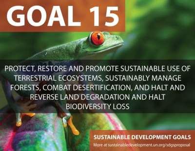 Goal-15