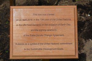 Photo:A plaque commemorates the 22 April tree planting.