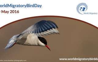 Image: World Migratory Bird Day