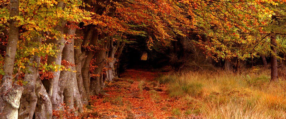elm Muir Forest of West Lothian, Scotland.
