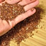 Ensalada quinoa 6