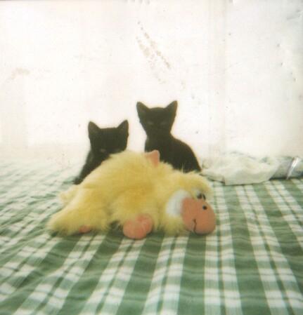 alt= gatti - cuccioli
