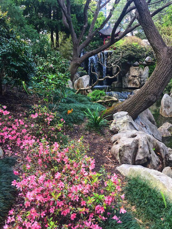 Chinese Garden a Sydney