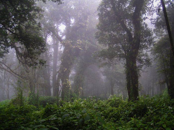 Foresta Doi Ithanon
