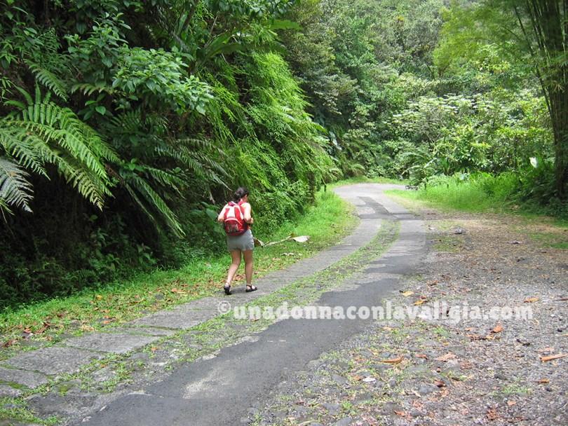 Guadalupa camminare nella foresta tropicale