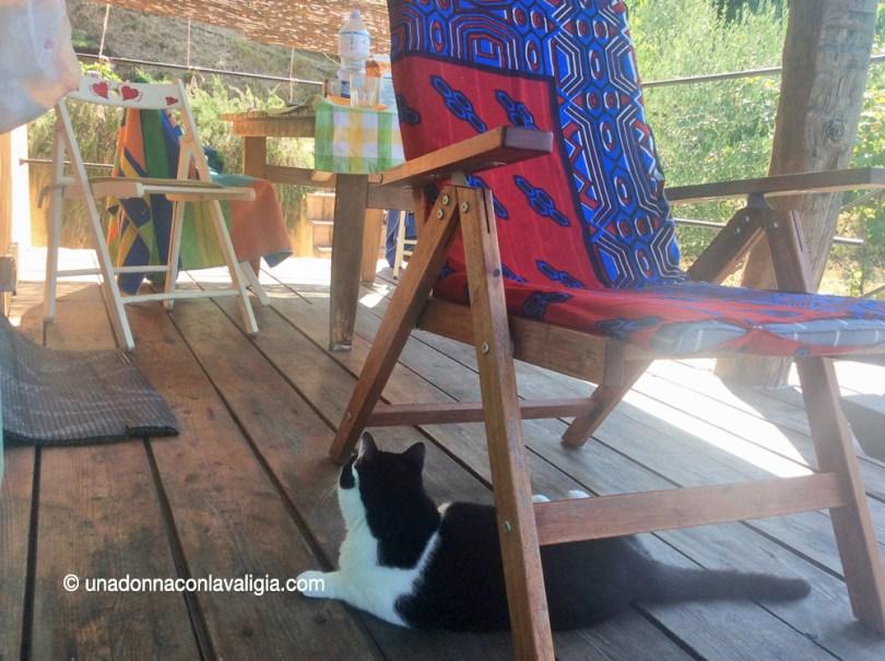 andare in vacanza con il gatto