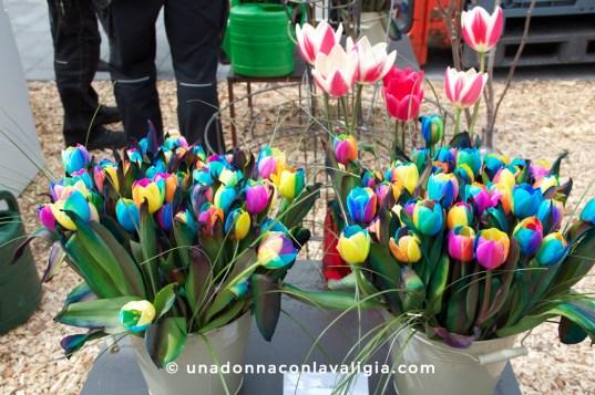 Tulipani recisi multicolori