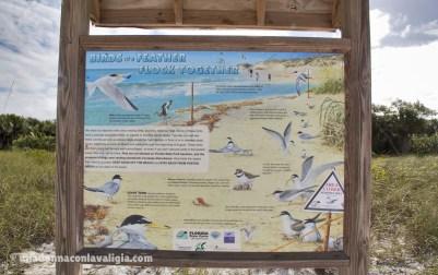 delnor wiggins state park beach
