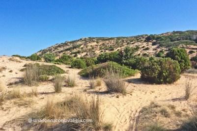 Dune e vegetazione a Su Giudeu