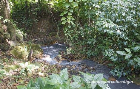 Diamonds River Saint Lucia