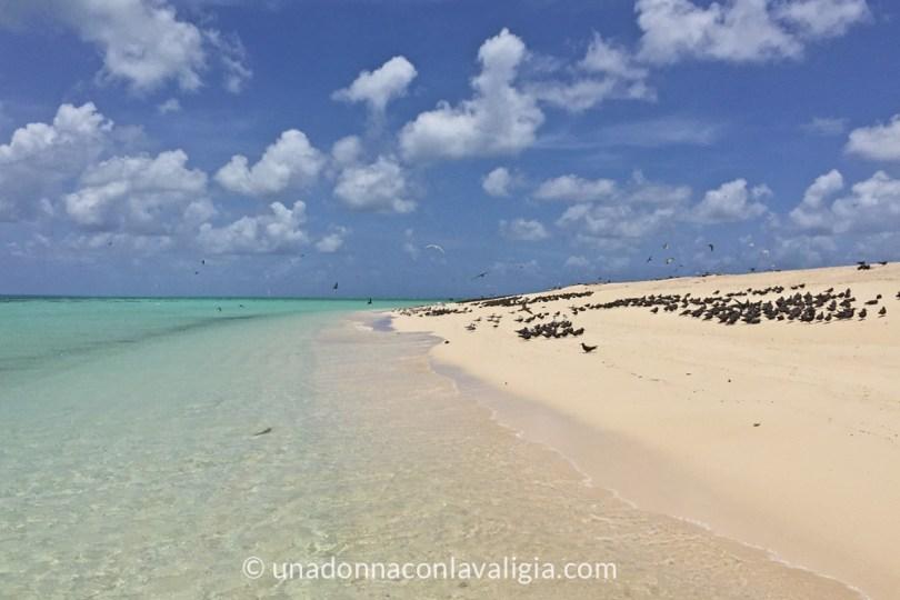 michaelmas-cay-snorkeling-grande-barriera-corallina