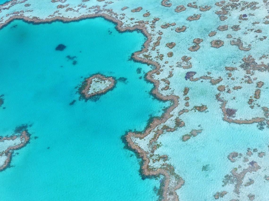 heart reef whitsundays