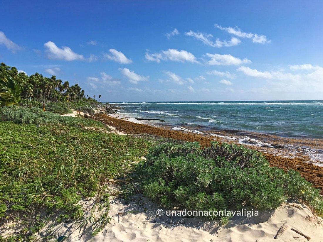 spiaggia alghe messico