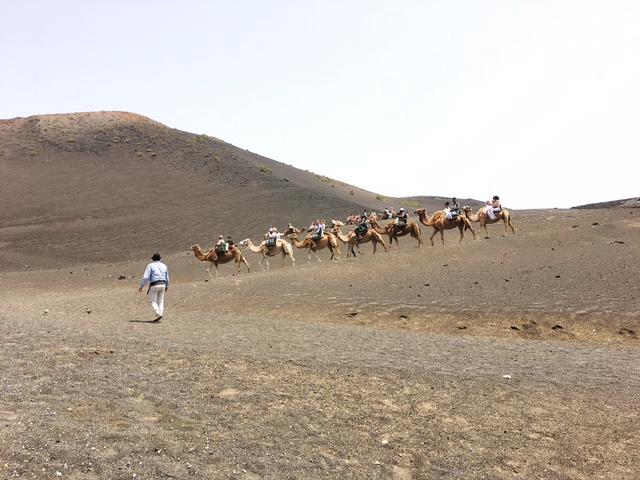 Giro in dromedario nel Parque Nacional de Timanfaya