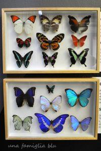 Casa delle Farfalle di Bordano - una famiglia blu