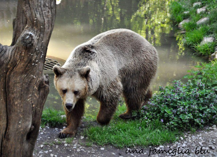 zoo Lubiana orso